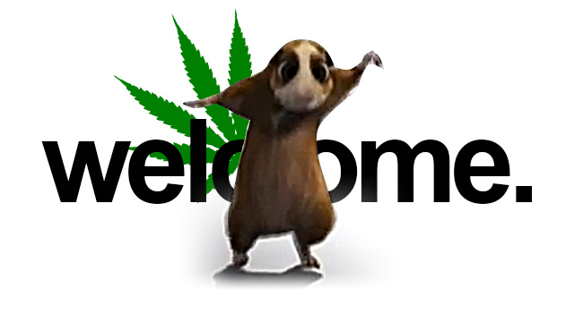 welcome to stoner days