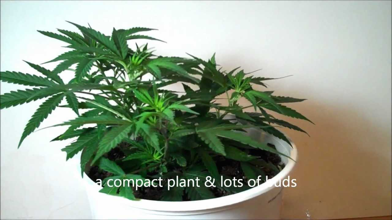 How To LST Pruning Mar...