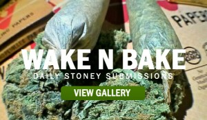 STONER-SUBMISSIONS