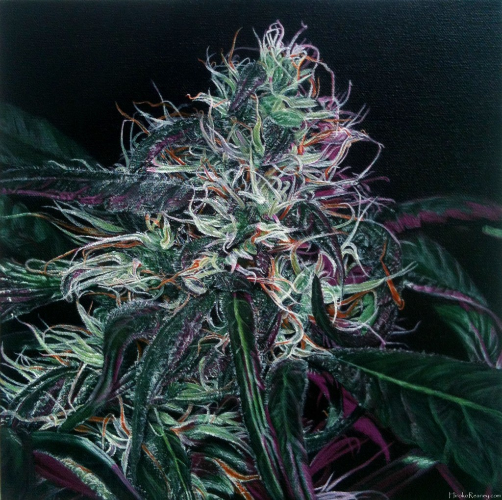 canna_art_skunkola_pr_cr