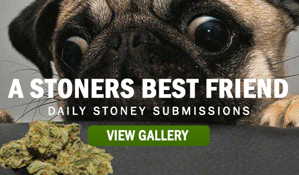 stoners-best-friend