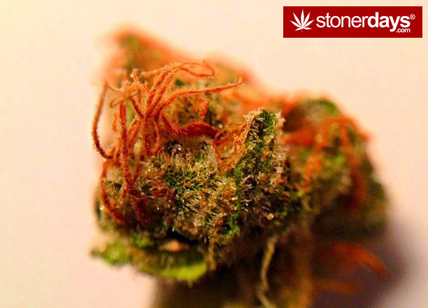 smoking-weed-blazed-stoner-crackingbones-(4)