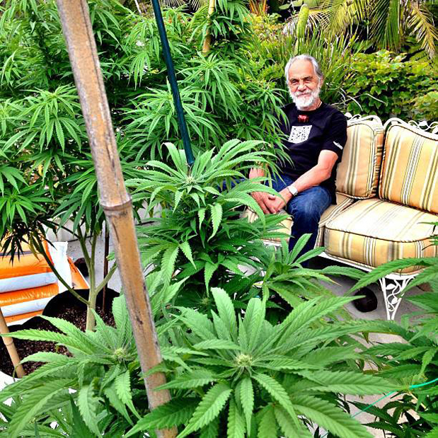 Tommy Chong Wallpaper There Are so Many People