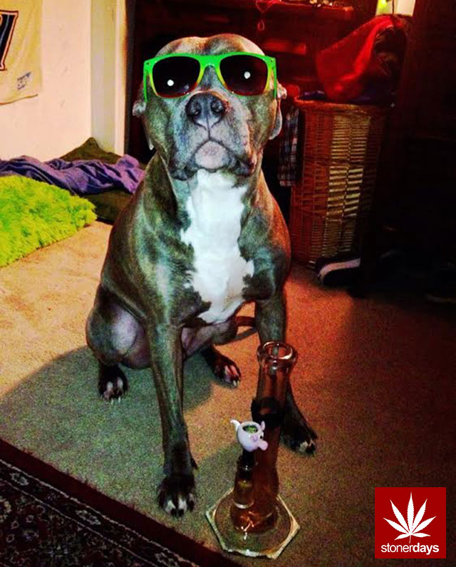 dog-smoking-weed