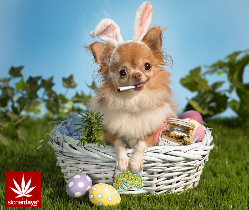 easter copy