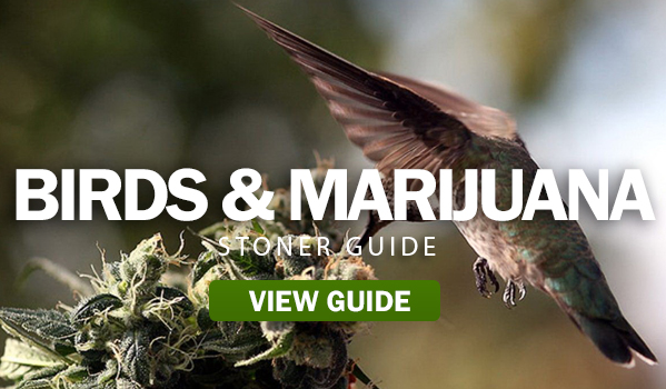 Birds Good For Your Marijuana Plants