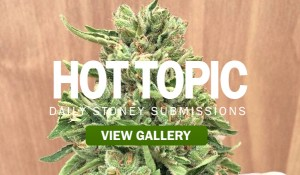 HOT-TOPIC-MARIJUANA