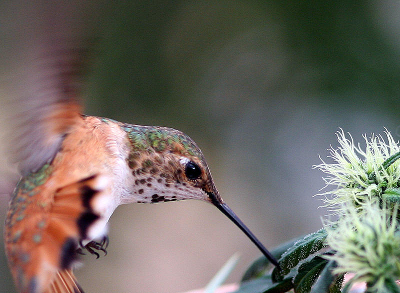 how to keep birds away from marijuana plants