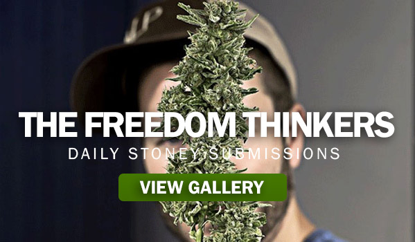 The Freedom Thinkers
