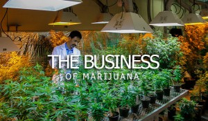 business-marijuana