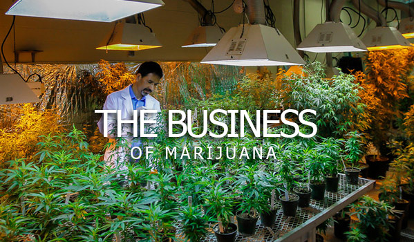 The Business Of Marijuana
