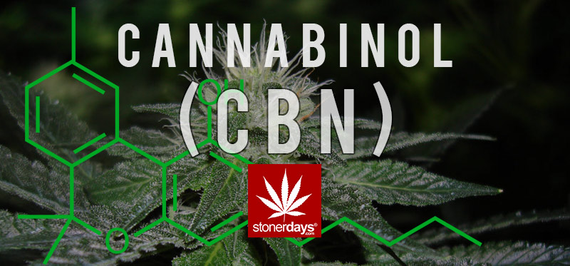 cbn-marijuana-stonerdays