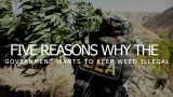 Five Reasons Why The Government Wants To Keep Weed Illegal
