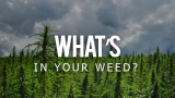What's In Your Weed