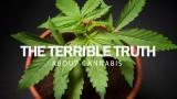 The Terrible Truth About Cannabis