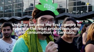Cannabis Country – The Biggest Weed Grower In Uruguay