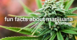 fun-marijuana-facts