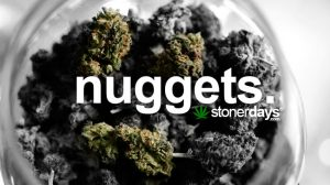 nuggets-of-marijuana