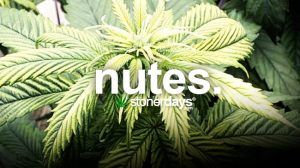 nutes-marijuana-nutrients