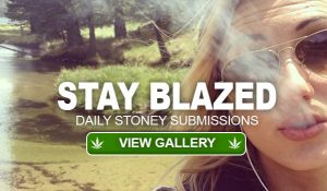 stay-blazed-submissions