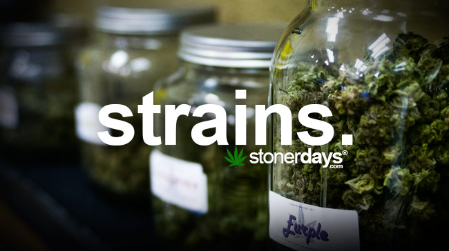 strains-marijuana-term