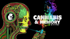 cannabis-and-memory