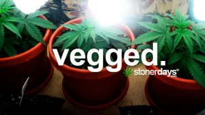 vegged-marijuana-term