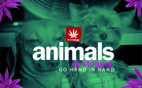 stoner-pets-animals-know-if-you-are-stoned