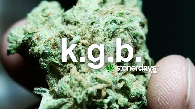 kgb-marijuana-term