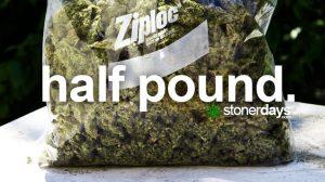 half-pound-marijuana
