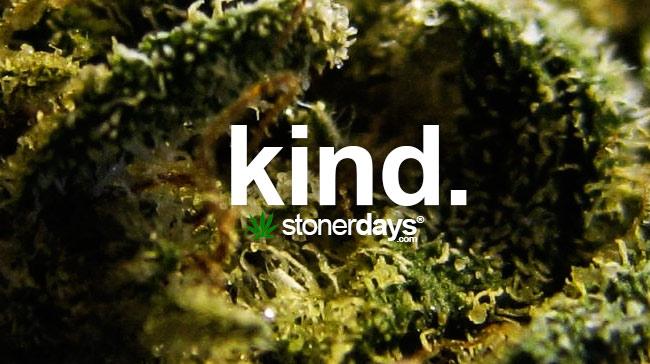 kind-marijuana-term