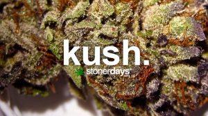 kush-marijuana-term