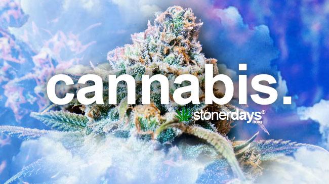 cannabis-marijuana