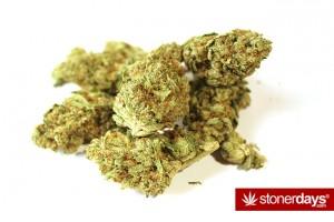 Girl Scout Cookies marijuana review