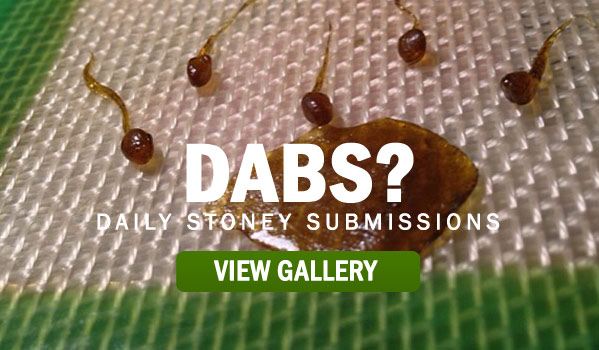 DABS-STONER