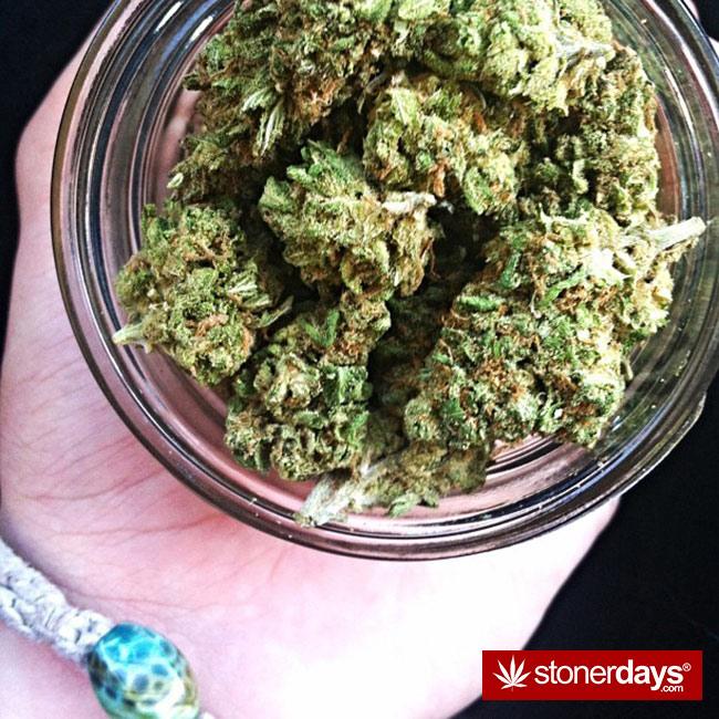 420-babe-stoned-blazed-Chelsoy--(32)
