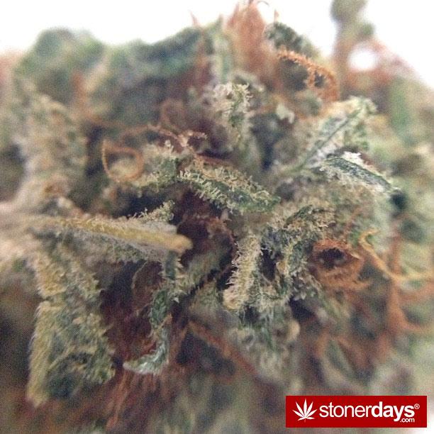 420-babe-stoned-blazed-bongbint-(19)