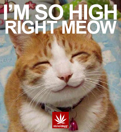 RIGHT-MEOW