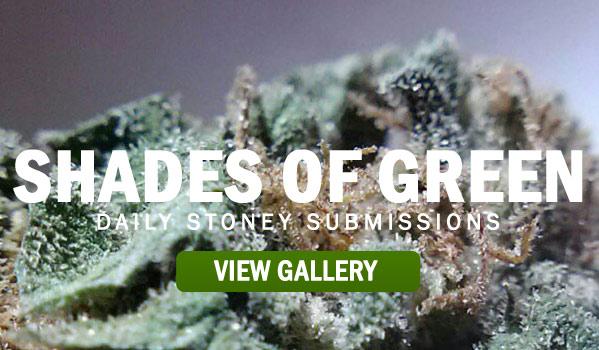 SHADES-OF-GREEN