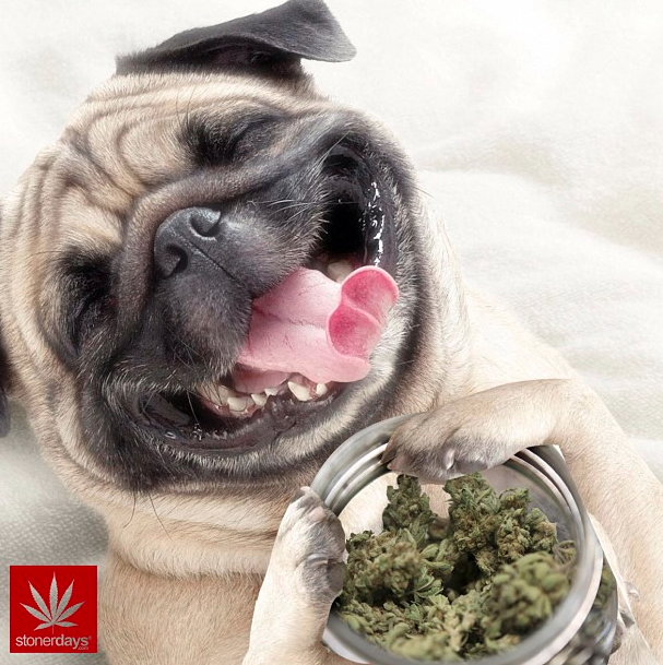 dog-weed