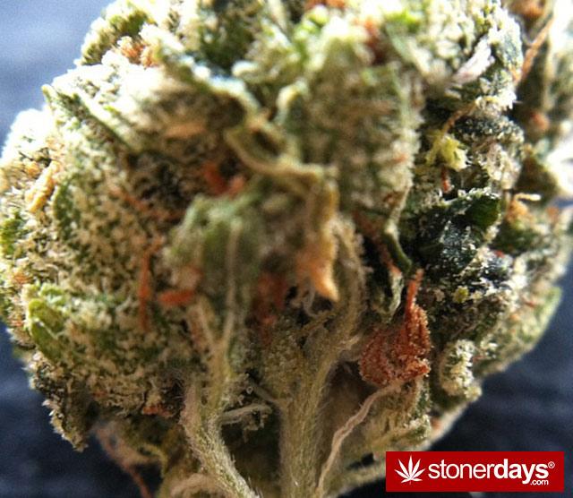 Stoner-bong-weed-marijuana-alwayzkush-(48)
