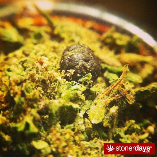 blazed-420-babe-stoned-__misstetra__-(51)