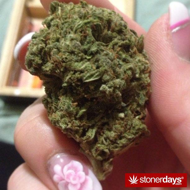 blazed-420-babe-stoner-ladyxp_xo-(15)