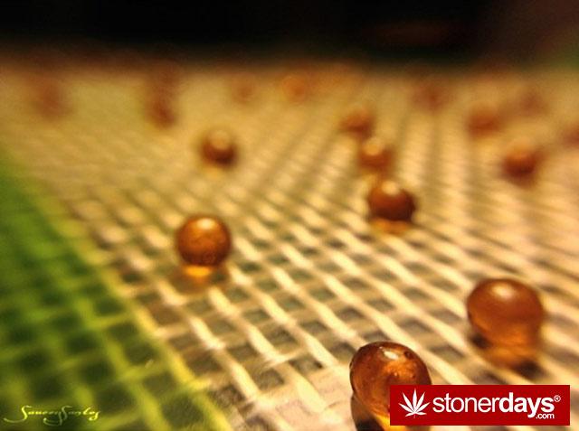 blunts-weed-dabs-stoner-sauceysantos-(11)