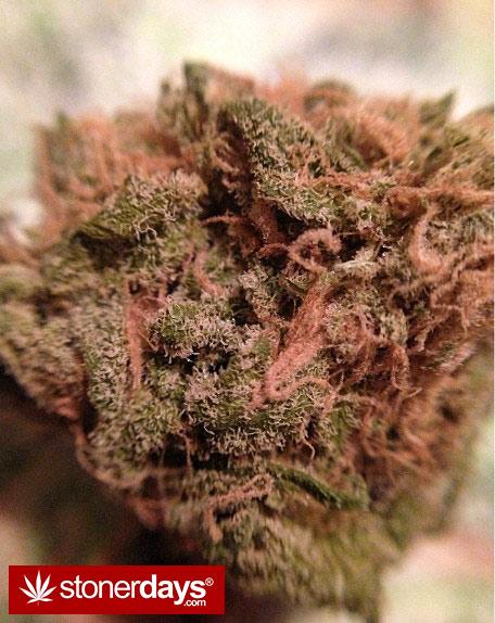 munchies-stoners-marijuana-littlemissstank-(10)