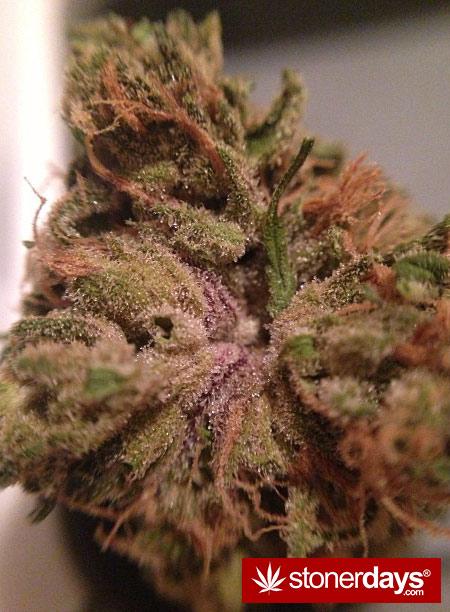 munchies-stoners-marijuana-littlemissstank-(13)