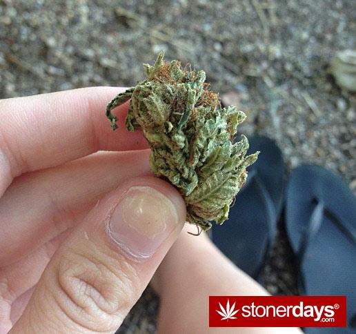 munchies-stoners-marijuana-littlemissstank-(5)