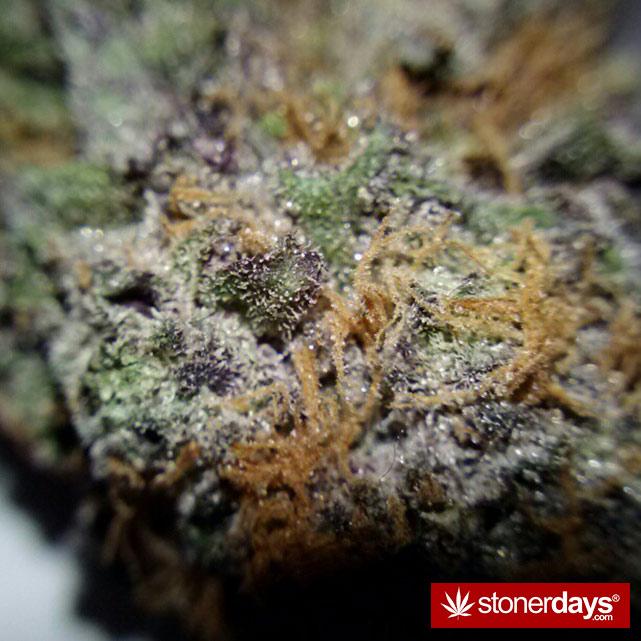 sexy-stoner-marijuana-pictures (18)