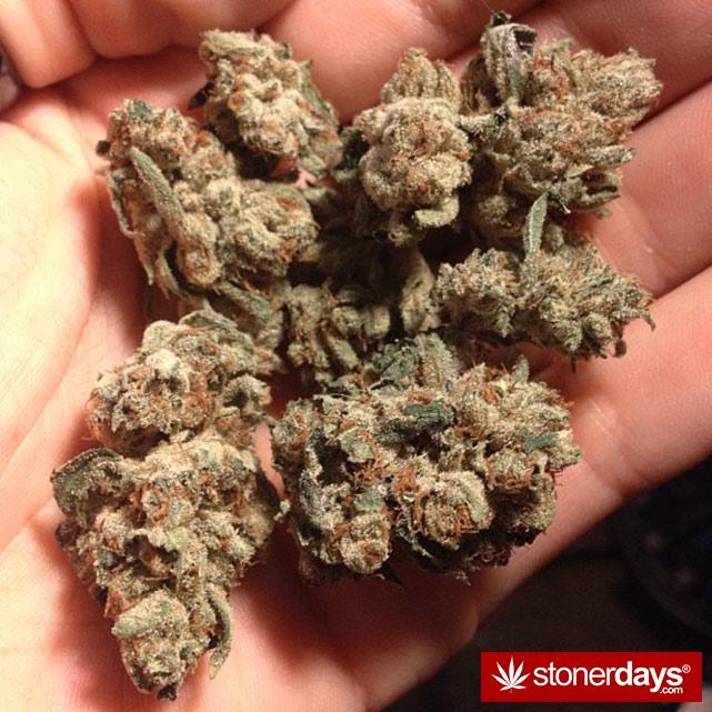 sexy-stoner-marijuana-pictures (3)