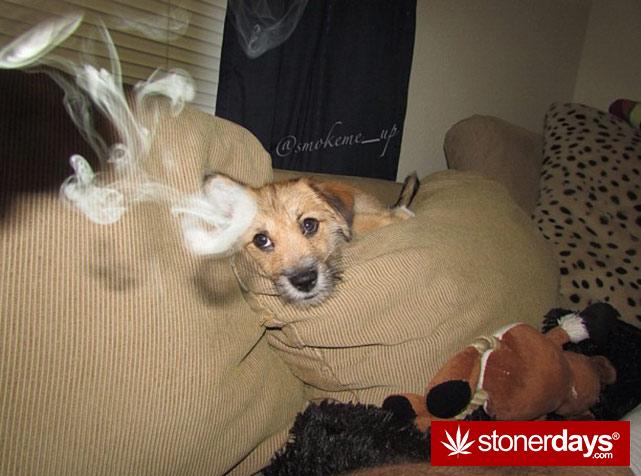 sexy-stoner-marijuana-pictures (496)